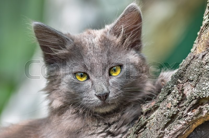 Stock image of 'Gray cat sitting on a tree in summer close'