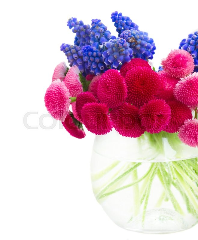 Stock image of 'bunch of Muscari and Daisy Flowers in vase close up isolated on white background'