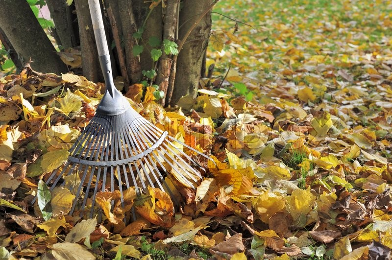 Stock image of 'rake in golden dead leaves in garden '