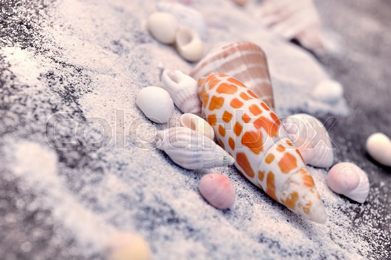 Stock image of 'exotic seashells on the sand on a plank '