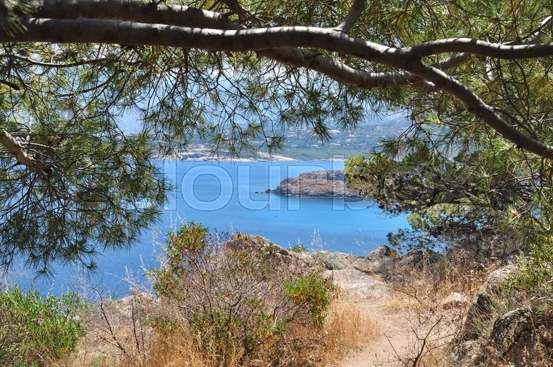 Stock image of 'blue sea in Corsica trought the pine branches '