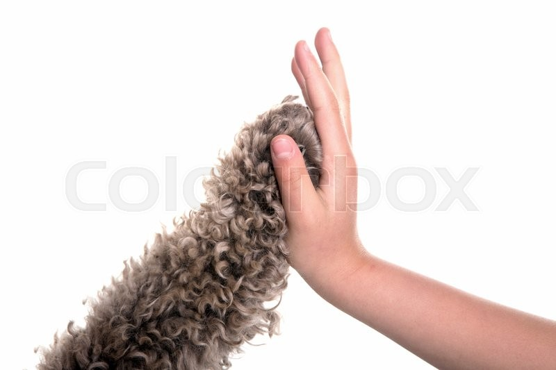 Stock image of 'high five dog and girl in studio with white backdrop'