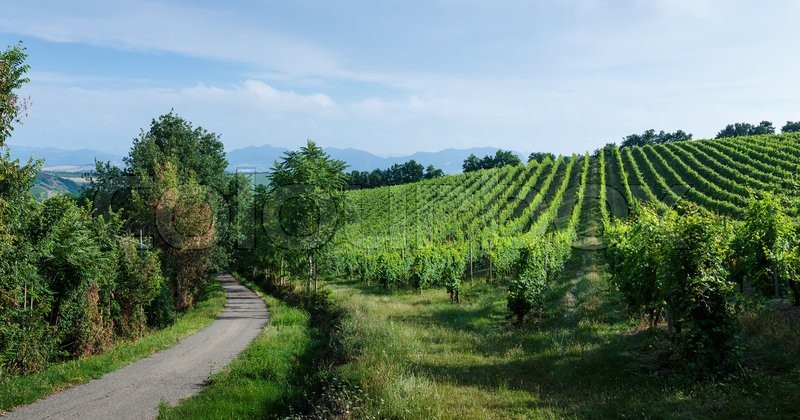 Stock image of 'Fields with vineyards,  Italian landscape in Tuscany'