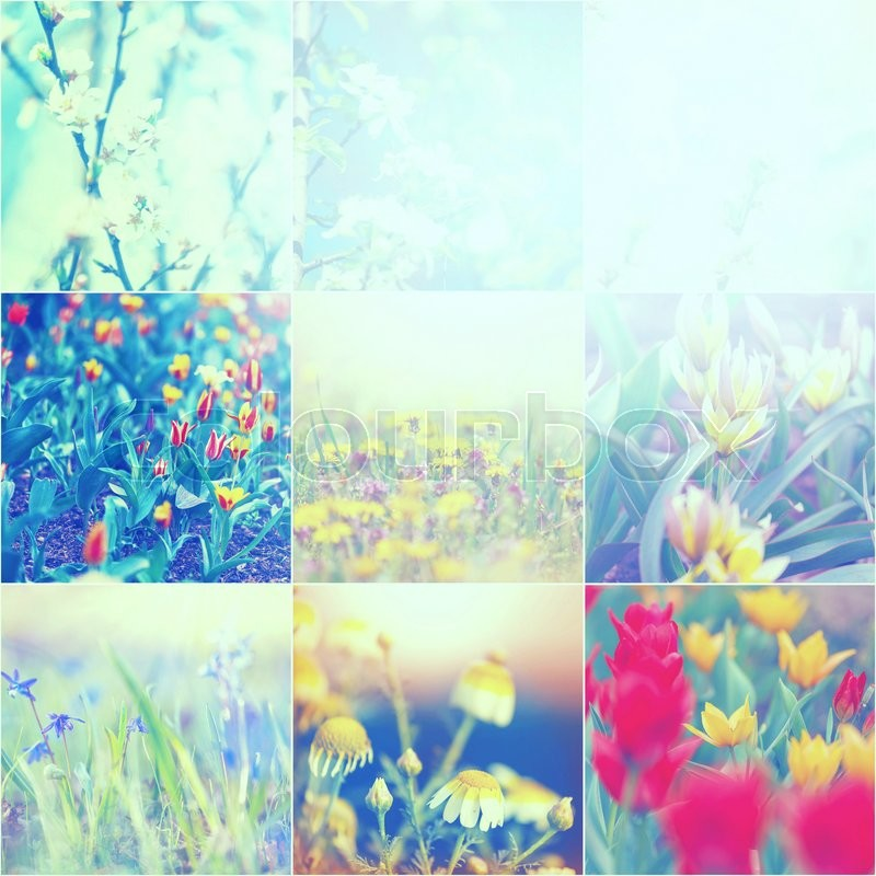Stock image of 'Spring flowers collage'