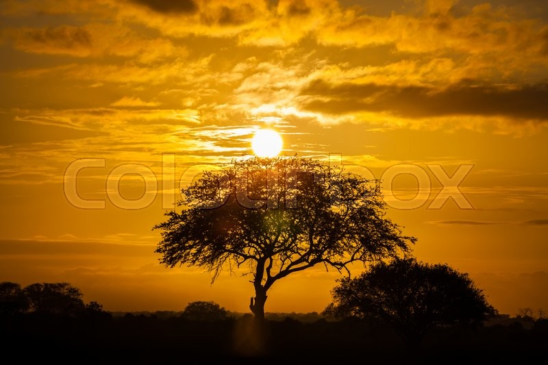 Stock image of 'A typical african sunset with a front tree silhouettes and clouds'