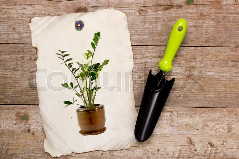 Stock image of 'Shovel for horticulture and image houseplant on a wooden background'