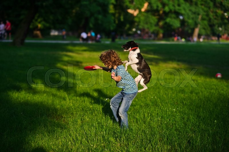Stock image of 'The boy trains a dog.In a summer garden the boy of 8-9 years plays with a dog.In a hand at the boy a disk.Highly jumped dog tries to grab with frisbee.'