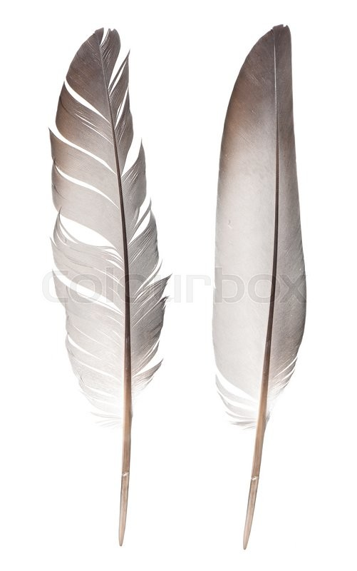 Stock image of 'Feathers isolated on white background'