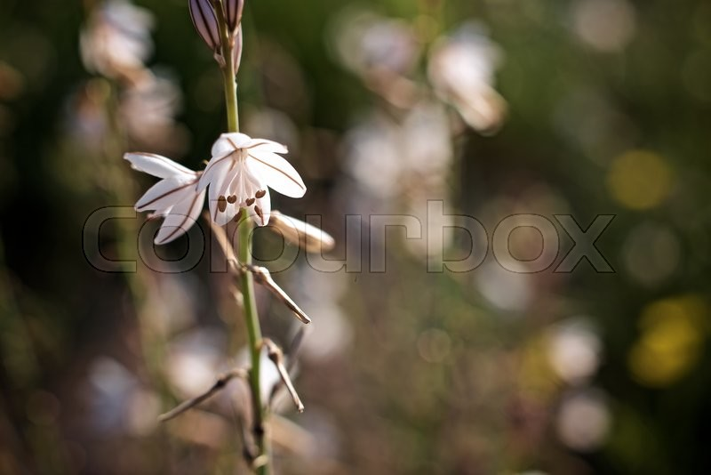 Stock image of 'Wild flower close up in Zaragoza Province, Aragon, Spain.'