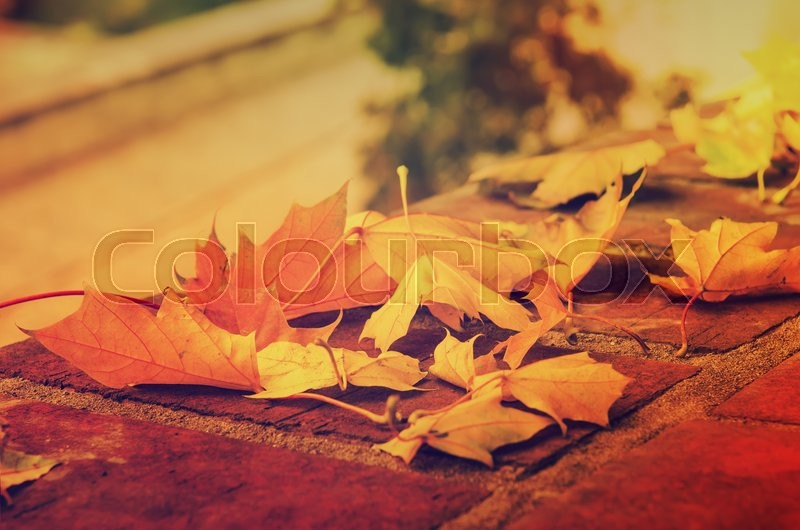 Stock image of 'Autumn maple leaf lying on the tile, seasonal fall natural vintage hipster background'