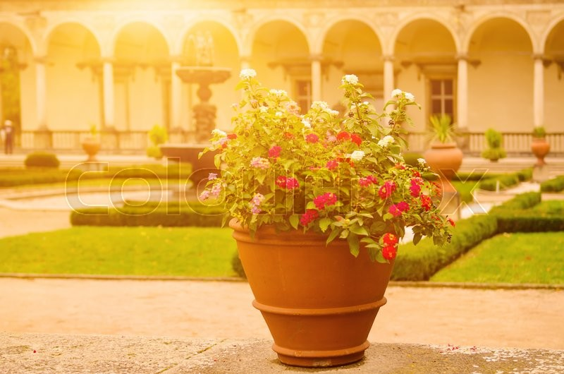 Stock image of 'Ceramic pots with blooming red and white flowers in the park with green lawn and antique building patio at the background'