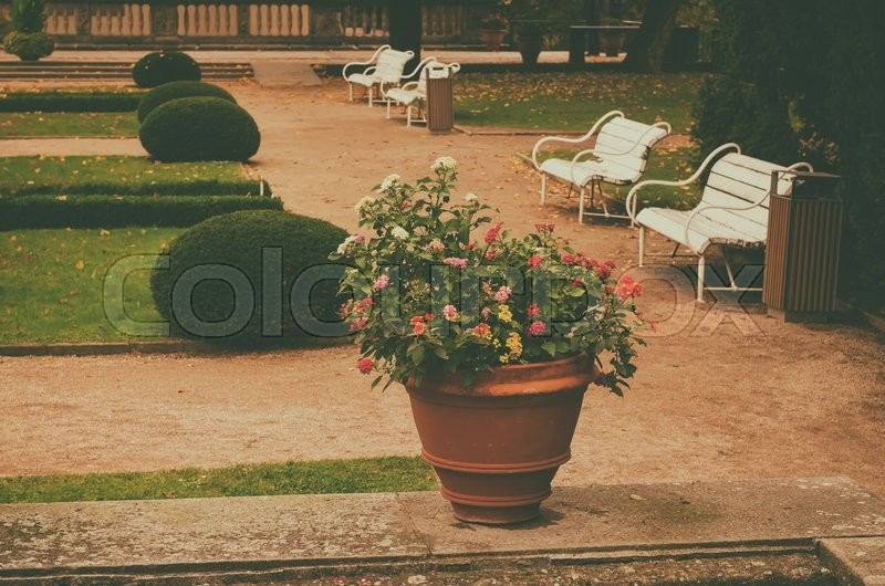 Stock image of 'Ceramic pots with blooming red and white flowers in the park with green lawn and benches'