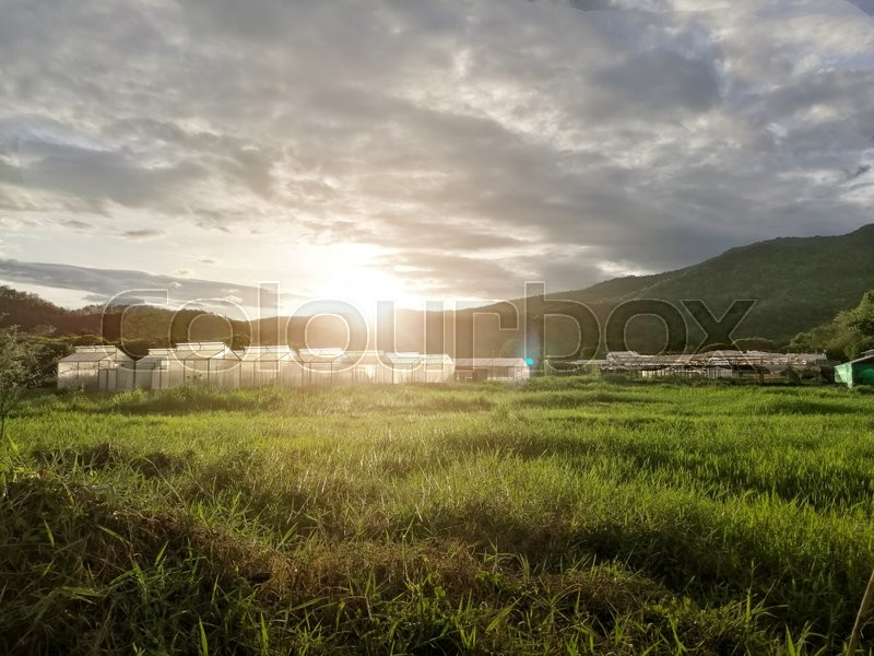 Stock image of 'Plant nursery of organic vegetable surrounded by nature and trees with sunlight of the evening. hdr process'