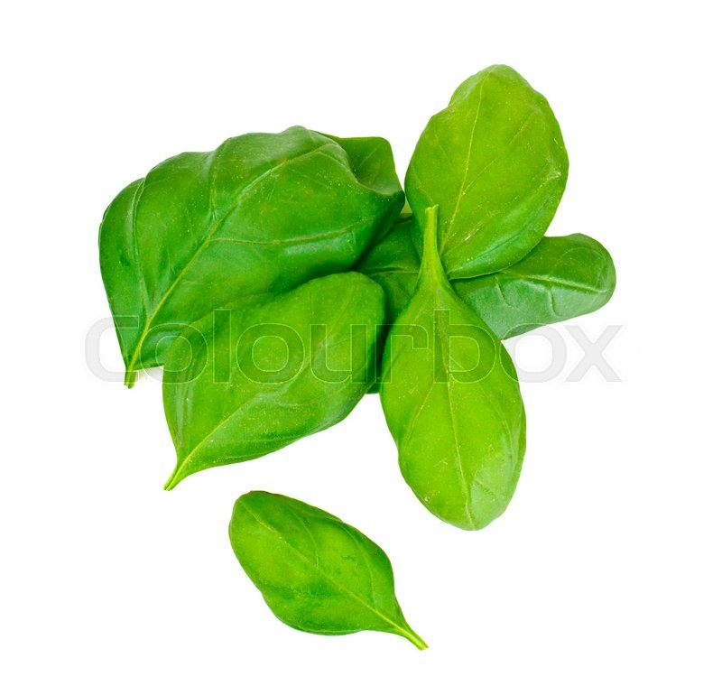 Stock image of 'Fresh Green Basil Studio Photo'