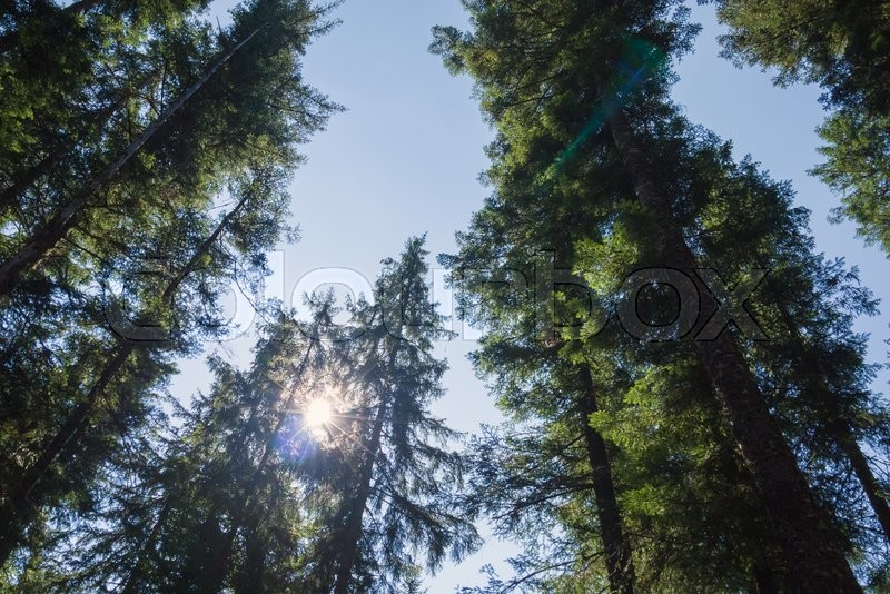 Stock image of 'light rays make their way through the tree crown'