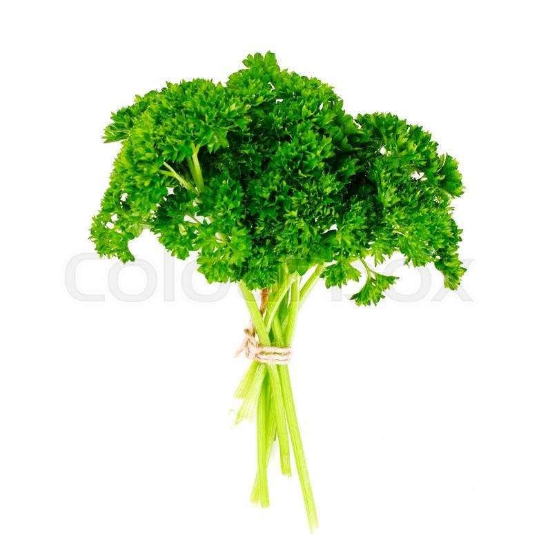 Stock image of 'Fresh Green Parsley Studio Photo'