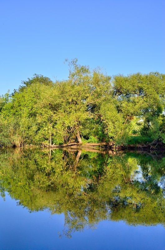 Stock image of 'Green trees and bushes grow on the lake'