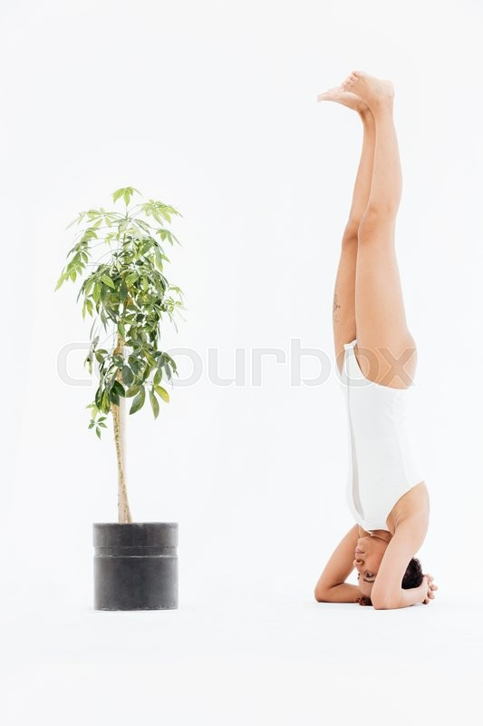 Stock image of 'Beautiful african american young woman doing yoga exercise and balancing on hands near small tree in pot over white background'