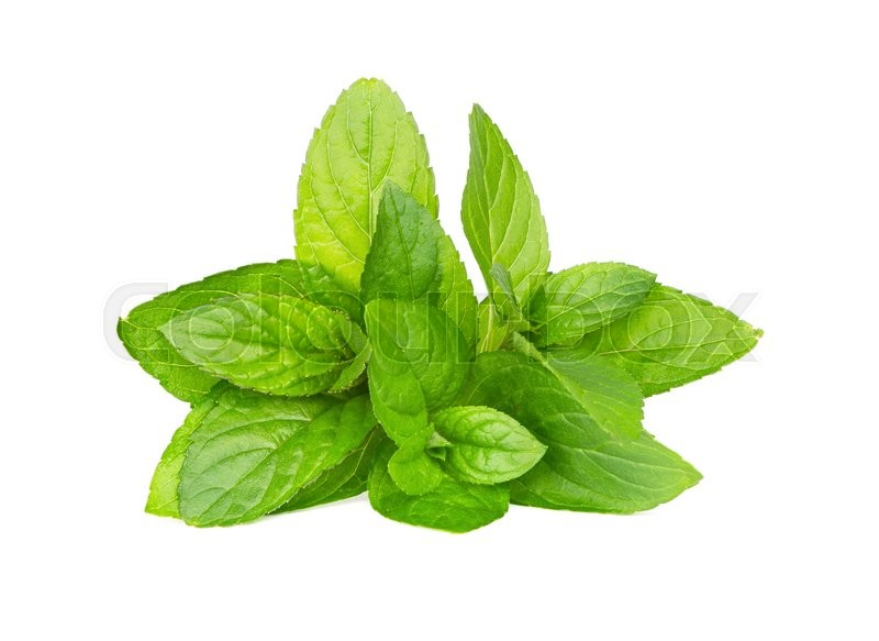 Stock image of 'Fresh green mint isolated on white'