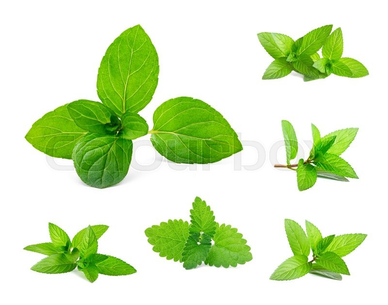 Stock image of 'Fresh mint and melissa leaves isolated on white. Set'