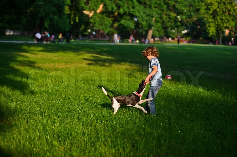 Stock image of 'The naughty boy plays with doggy on a green glade in park.She tries to pull out a disk of red color from a mouth of a dog. But the dog has seized him strong. She likes to play.'