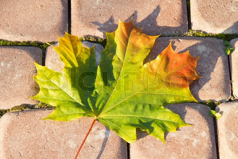 Stock image of 'Autumn maple leaf on the red stones'