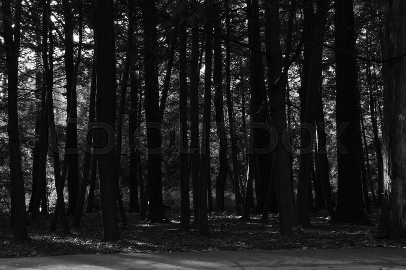 Stock image of 'trees in the autumn forest black and white'