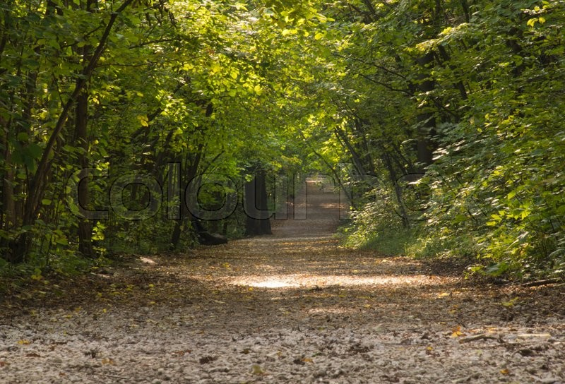 Stock image of 'ground road during the day in the autumn forest'