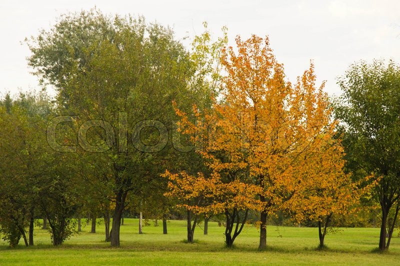 Stock image of 'tree with orange leaves in autumn park'