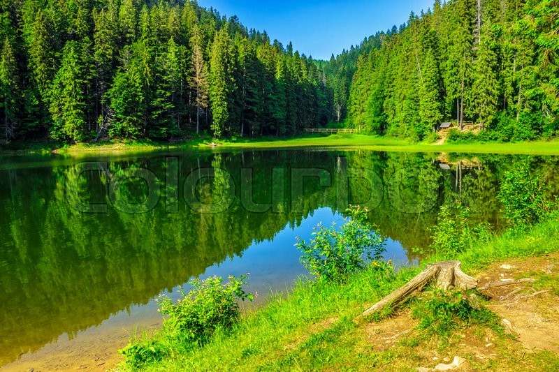Stock image of 'landscape by the lake in the early morning. coniferous forest near the lake in mountains'