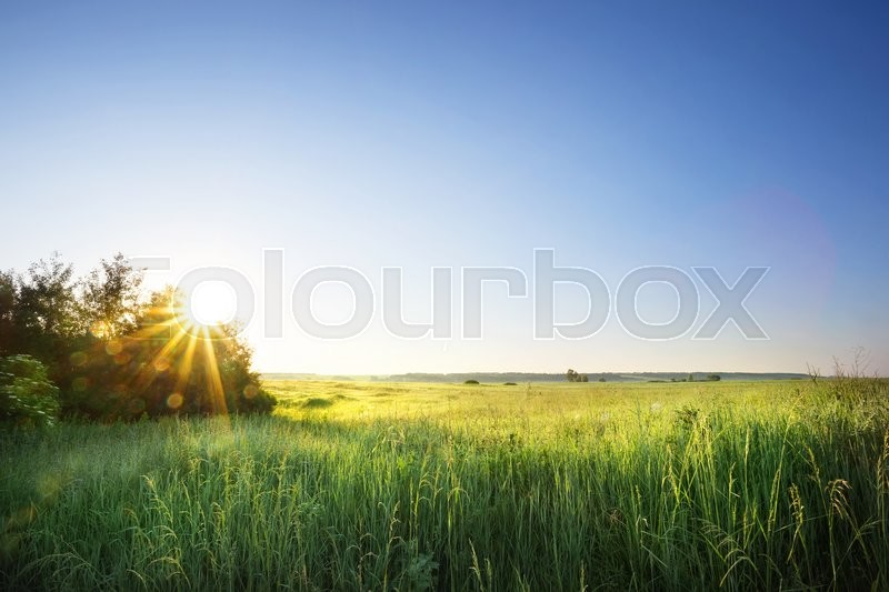 Stock image of 'Field with green grass under the morning sun'