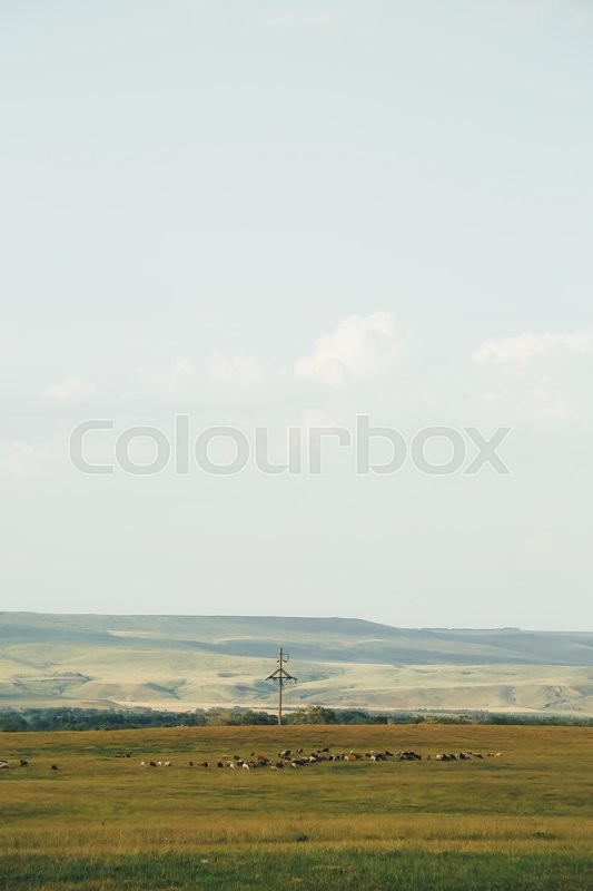 Stock image of 'a flock of sheep grazing in a meadow in the distance on a summer day'
