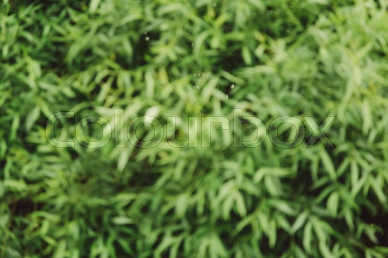 Stock image of 'Blurred abstract green background of leaves, copy space, lens blur'