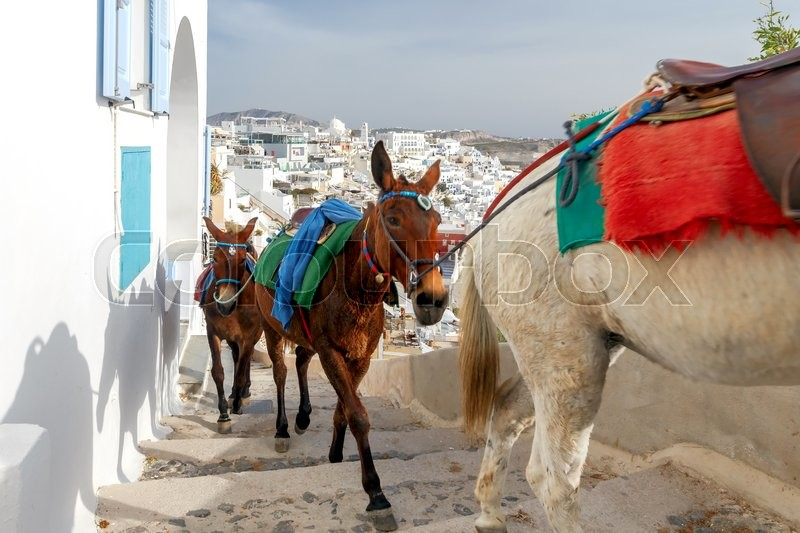 Stock image of 'Donkeys to transport tourists from the harbor to the town Fira, located on the top of the mountain.'
