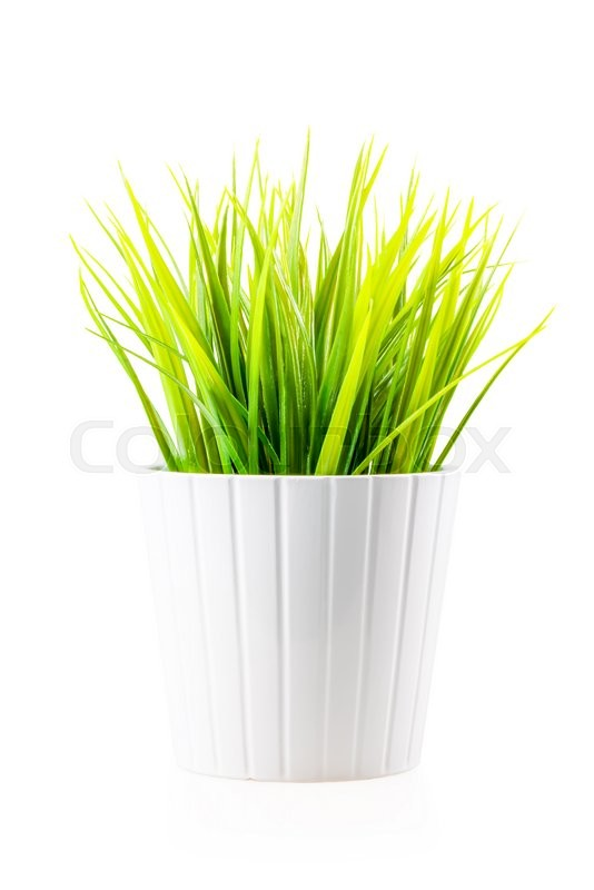 Stock image of 'Green artificial lawn grass in the white pot isolated'