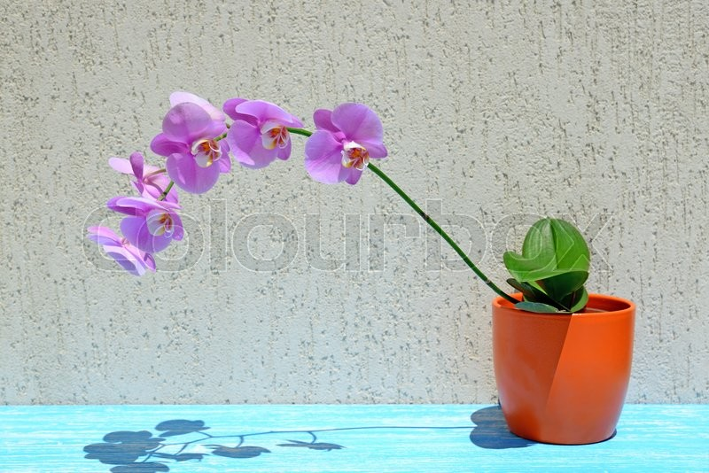 Stock image of 'Orchid flowers on wooden background'