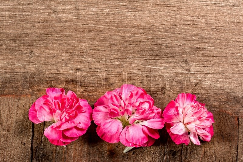 Stock image of 'Three Red Carnations in a Row on a Wooden Background'