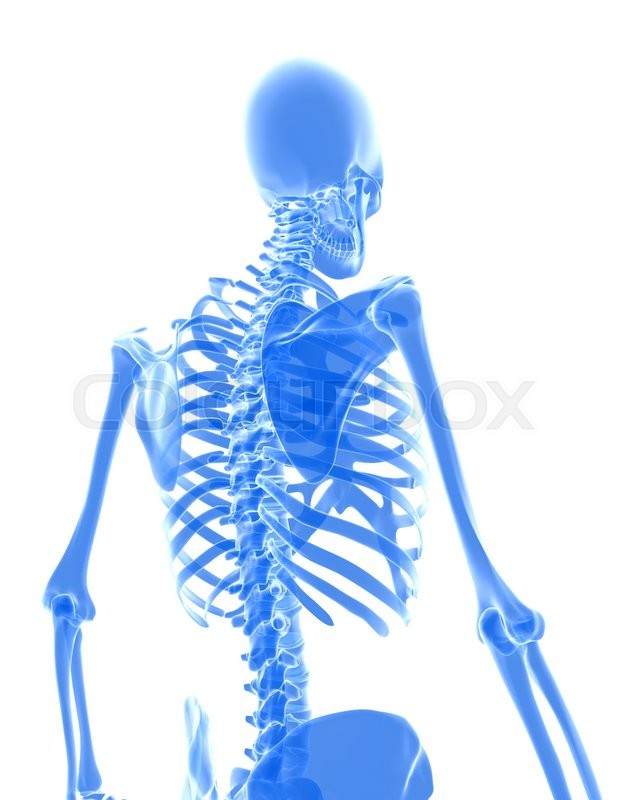 Stock image of '3D illustration of shiny blue skeleton system, medical concept.'