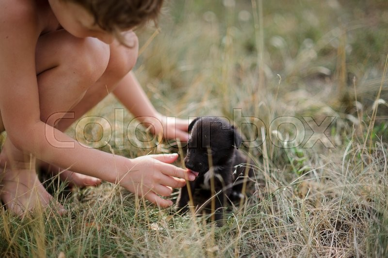 Stock image of 'The child fondle a puppy. On a dry grass the tiny black puppy sits. The child hunkered down and carefully touches puppy language.'