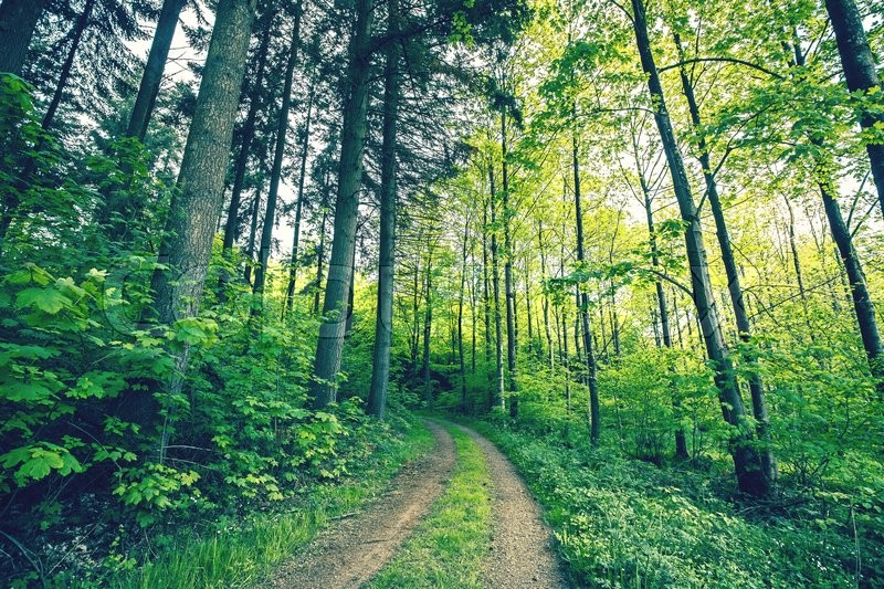Stock image of 'Green trees by a forest path in the spring'