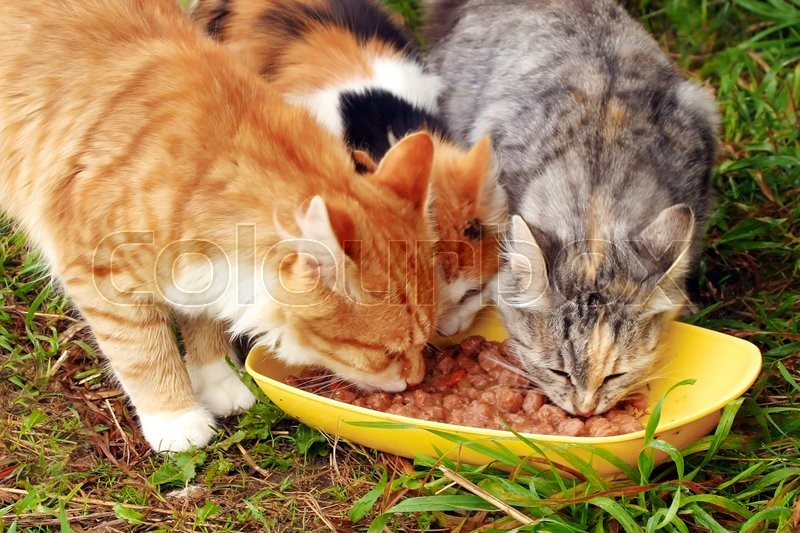 Stock image of 'Three cats having a breakfast'