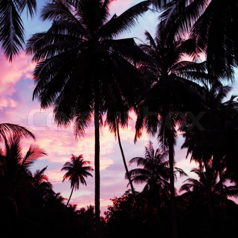 Stock image of 'Palms silhouette on the beauty sunset sky background'