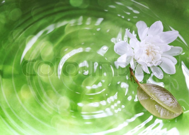White flower and leaf on a green liquid background with ripples and white flower and leaf on a green liquid background with ripples and reflections close up photo shallow depth of field added for natural view stock photo mightylinksfo