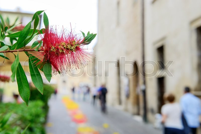 Image of a flower with blurred houses and people in Montefalco, Italy Umbria, stock photo