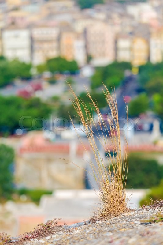 Stock image of 'Dry grass and blurred background with aerial view of Corfu city'