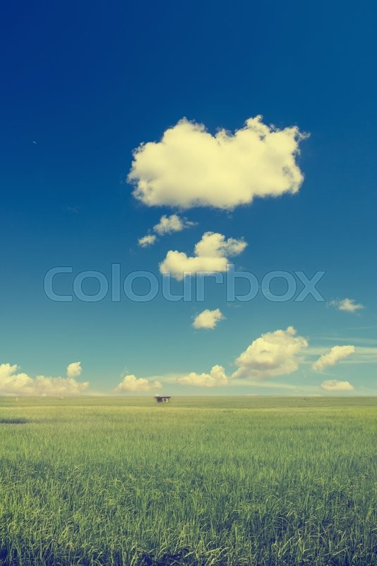 Stock image of 'paddy,field,rice,sky,blue,nature,landscape,cloud,atmosphere'