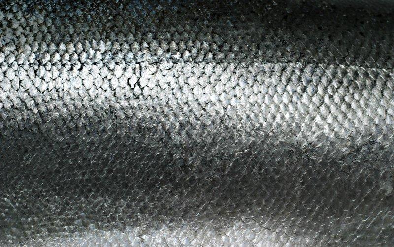 fischschuppen lachs fisch schuppen grunge texturen hintergrund stock foto entfernen