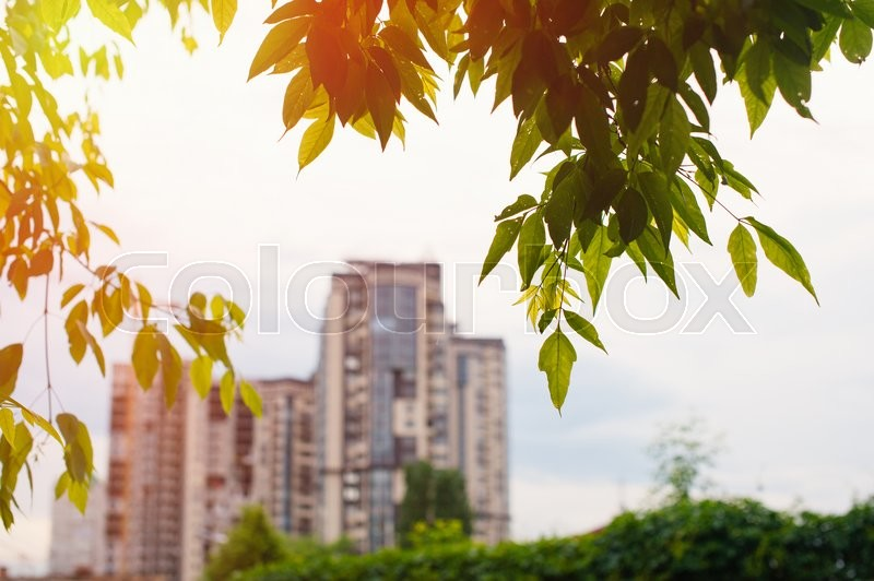 Stock image of 'high-rise buildings view from the park trees.'