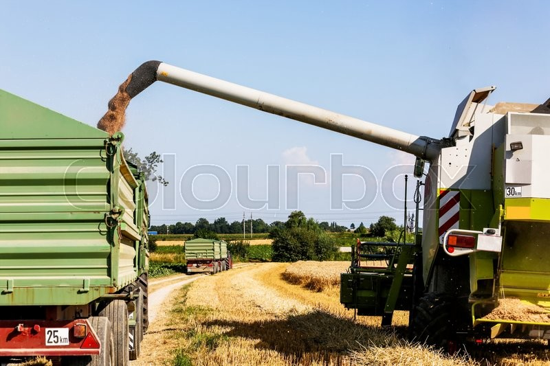 Stock image of 'a cornfield with wheat at harvest. a combine harvester at work.'