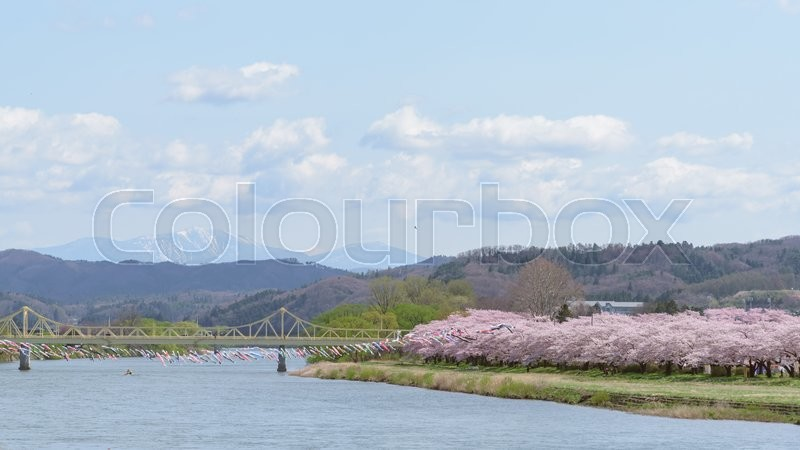 Stock image of 'View of Tenshochi Park in Iwate Prefecture,Japan is famous for the more than 10,000 cherry trees planted alongside the Kitakami River'